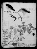 Papers and correspondence of John Gould (as filmed by the AJCP), [M725-M727, M2888-M2902]