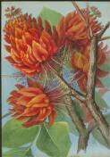 Ellis Rowan flowers from National Library of Australia