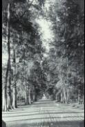 Casuarina Ave [picture].
