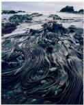 Dombrovskis, Peter, 1945-1996. Giant kelp, Hasselborough Bay, Macquarie Island, Tasmania, 1984 [picture] /