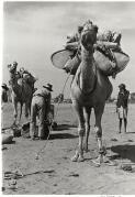 The last police patrol by camel departs Alice Springs, Northern Territory, 1945 / Axel Poignant